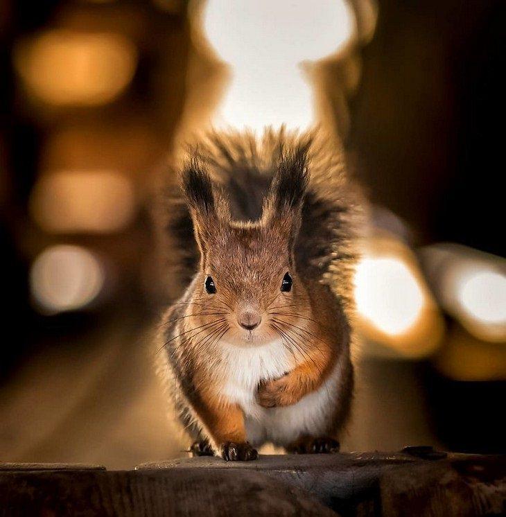 צילומי חיות מדהימים מפינלנד: סנאי