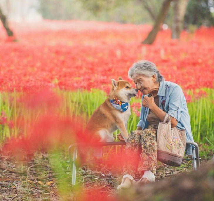 סבתא יפנית והכלב שלה: הסבתא והכלב על רקע פריחה בצבע אדום