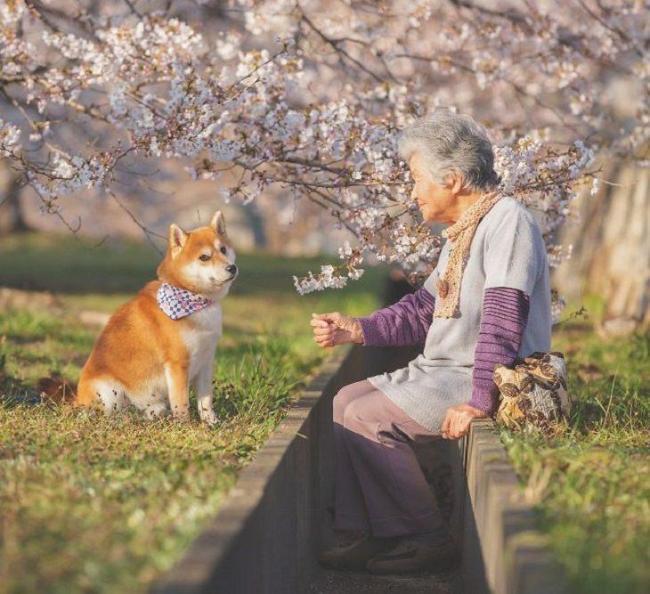 סבתא יפנית והכלב שלה: הסבתא והכלב על רקע פריחה לבנה