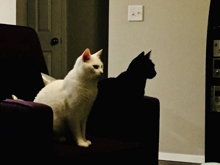 חתולים שחורים חמודים