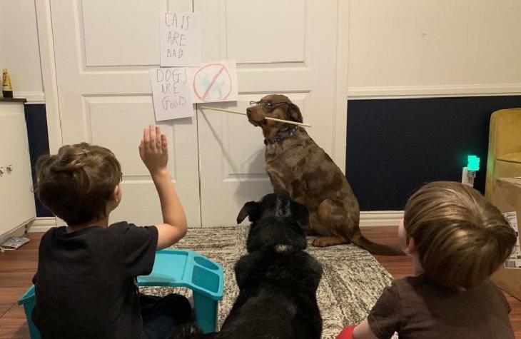 תמונות מצחיקות של הורים בבית עם ילדים קטנים: שיעור לילדים בבית עם הכלבים