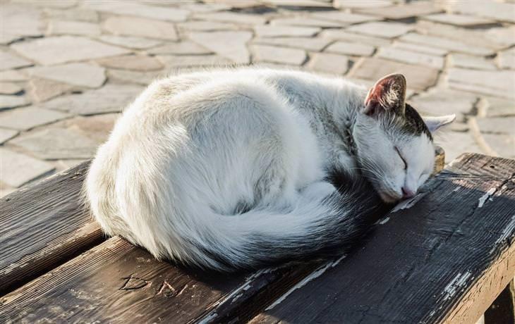 מה תנוחת השינה של חיית המחמד אומרת: חתול ישן בתנוחה מכורבלת