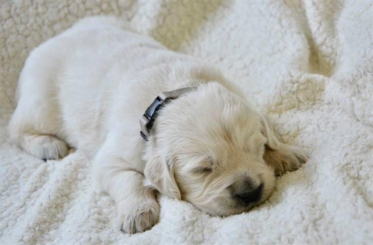 מה תנוחת השינה של חיית המחמד אומרת: כלב ישן על הבטן