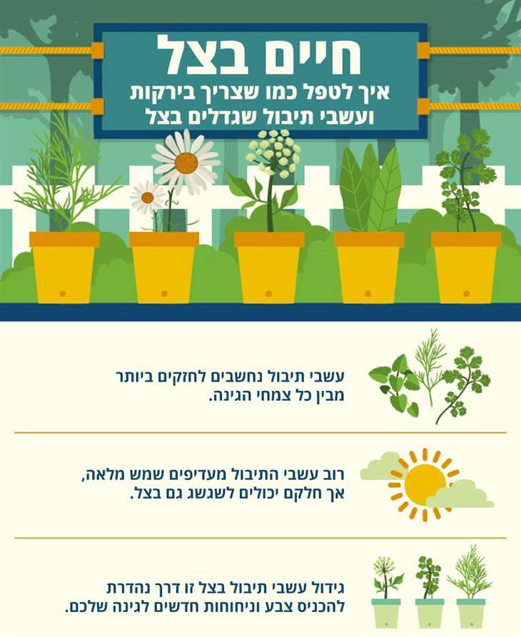 אילו צמחים מומלץ לגדל בצל: מידע על צמחים שגדלים בצל