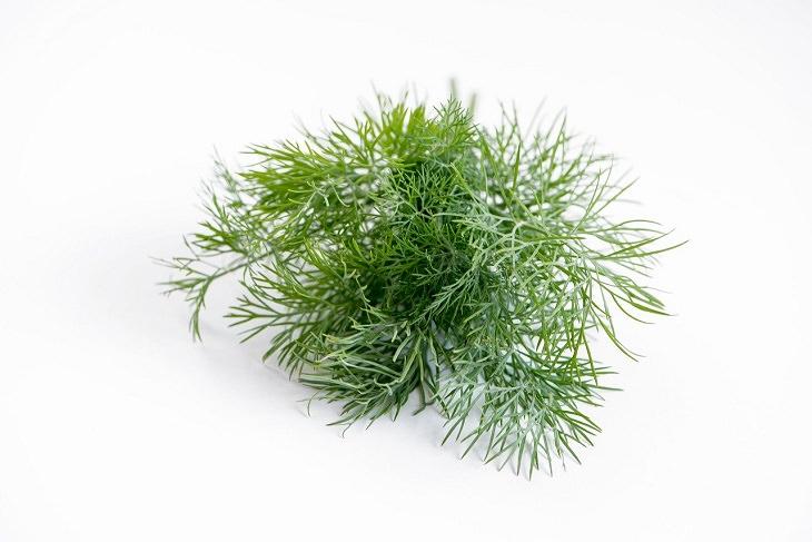 יתרונות בריאותיים של שמיר: צמח השמיר