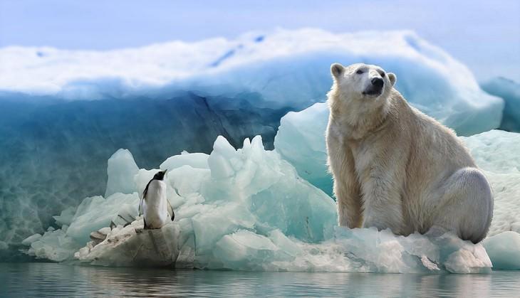 עובדות על דובי קוטב: דוב קוטב ופינגווין על קרחון