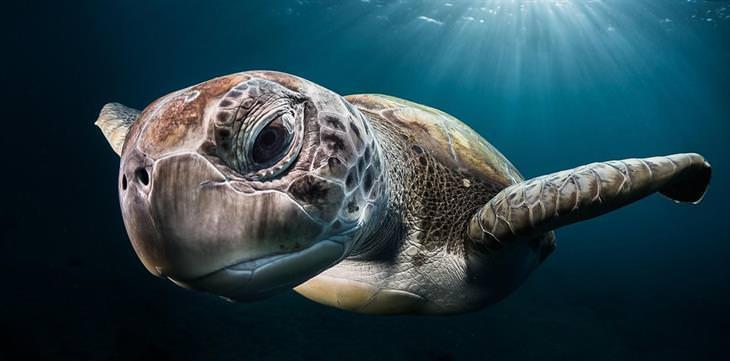 צילום תת ימי: צב ים