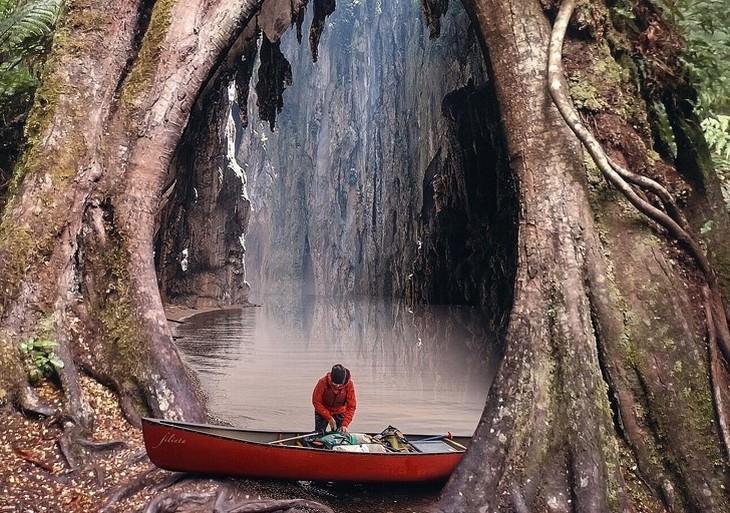 תמונות מלאות דמיון ושילובים מיוחדים: מפל בתוך גזע עץ