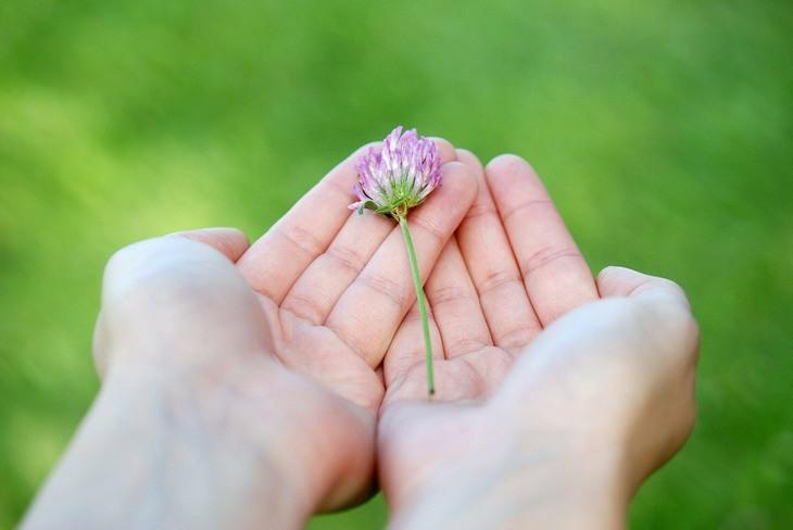 10 כללים לאושר: ידיים מגישות פרח