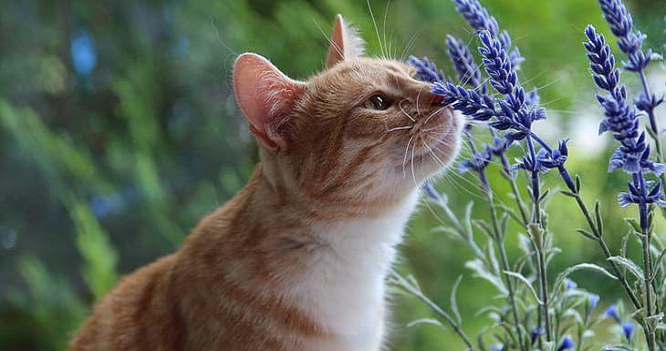 למה חשוב להרחיק שושנים מחתולים: חתול מריח פרח