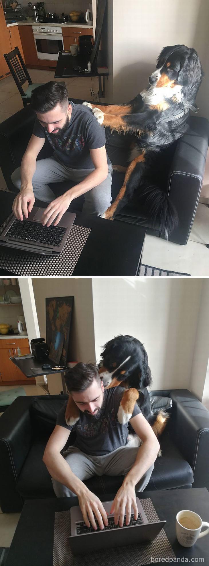חיות מחמד חמודות בעבודה מהבית: כלב מעסה את הגב של בעליו בזמן שהוא עובד מול המחשב