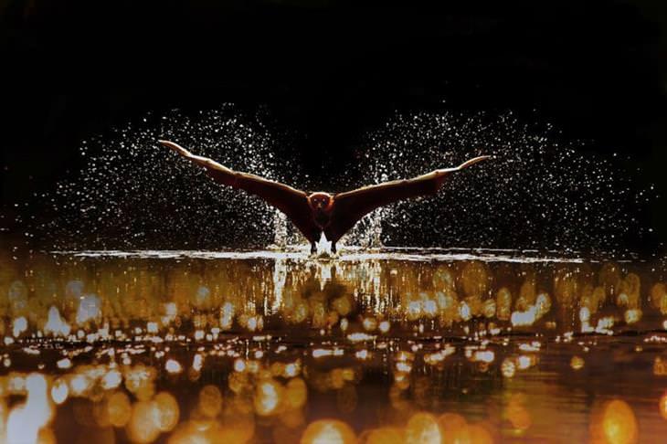 """תמונות מנצחות מתחרות צילום  """"מים 2020"""": עוף טס מעל המים ומתיז"""