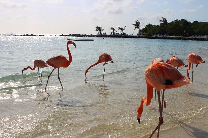 יעדים בעולם שהטיול אליהם הוא הרפתקה: חוף הפלמינגו בארובה
