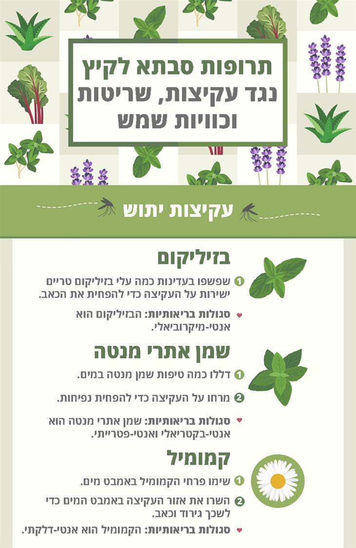 תרופות סבתא לכוויות שמש, עקיצות ושריטות: עקיצות יתוש