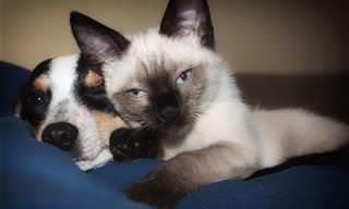 אוסף כתבות על גידול בעלי חיים: כלב וחתול שוכבים זה לצד זה