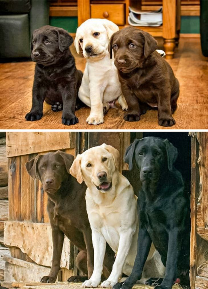 תמונות של כלבים שגדלו לצד חברים: שלישיית כלבים בצבעים חום, לבן ושחור, פעם והיום