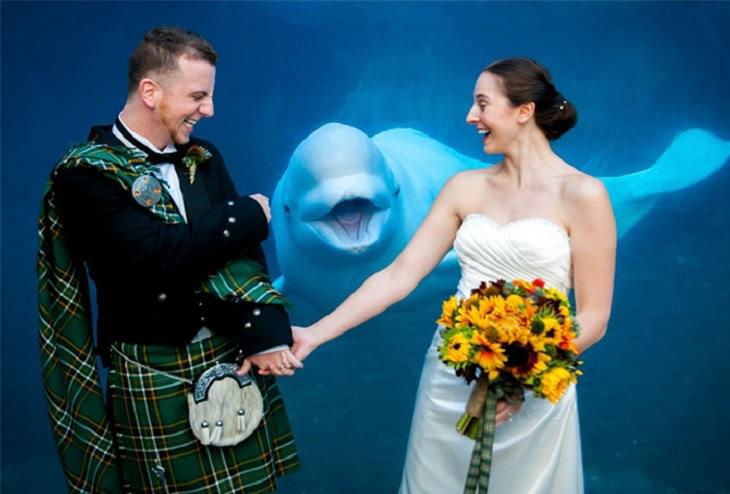 תמונות חתונה מצחיקות: לוויתן בלוגה מפריע לתמונת החתונה של זוג