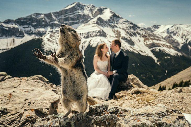 תמונות חתונה מצחיקות: סנאי מפריע לתמונת חתונה של זוג