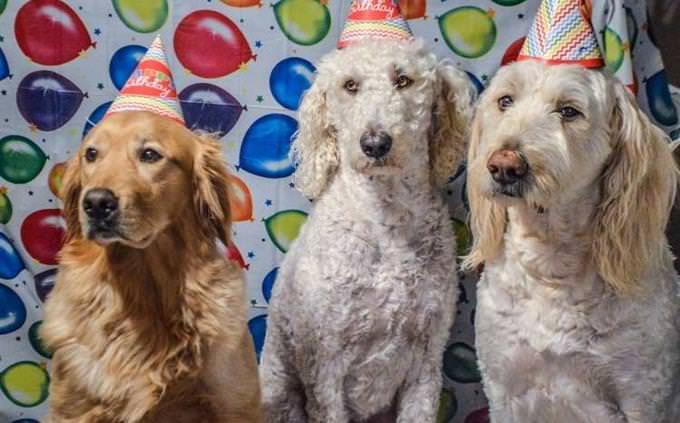 טריוויה על כלבים: יום הולדת לכלבים