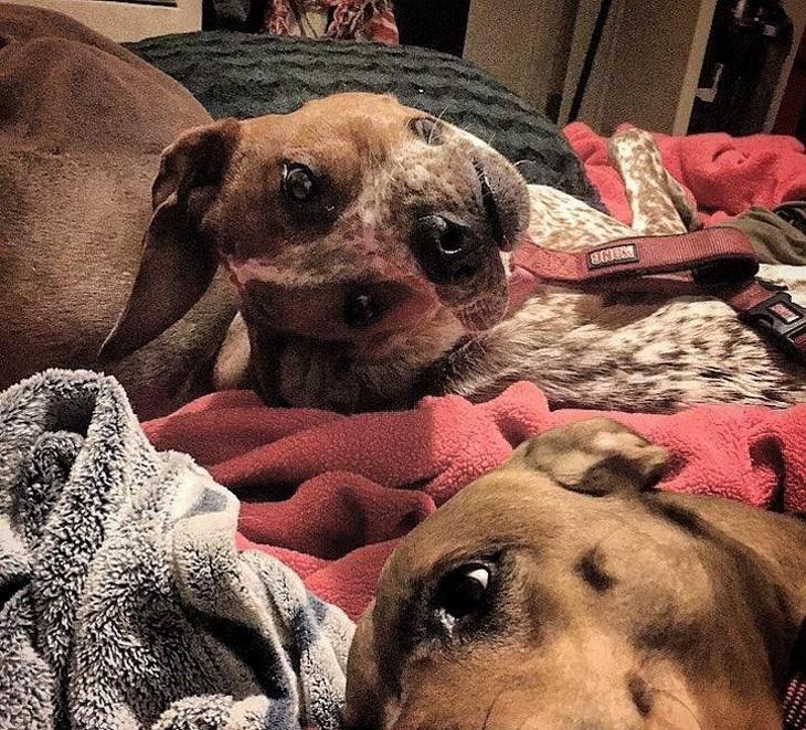 אשליות אופטיות ותמונות ברגע הנכון: כלב מעקם את הצוואר