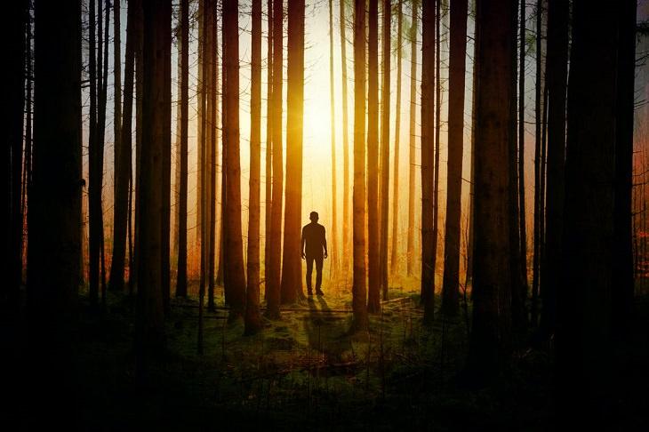 מקרי היעלמות לא מפוענחים: צללית של גבר על רקע זריחה בין עצים ביער