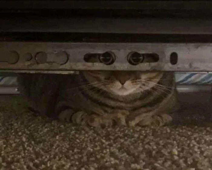 תמונות מצחיקות של חתולים: חתול מתחת למכונים שמביט למצלמה בדיוק דרך שני חורים בשלדה