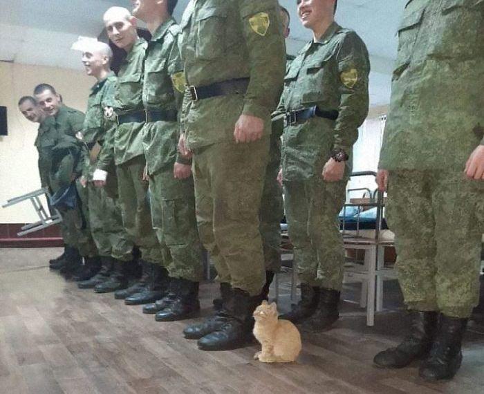 תמונות מצחיקות של חתולים: חתול במסדר צבאי