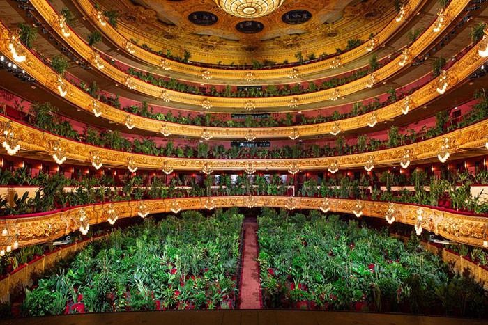 הופעה מול עציצים בבית האופרה בברצלונה: העציצים ממלאים את האולם