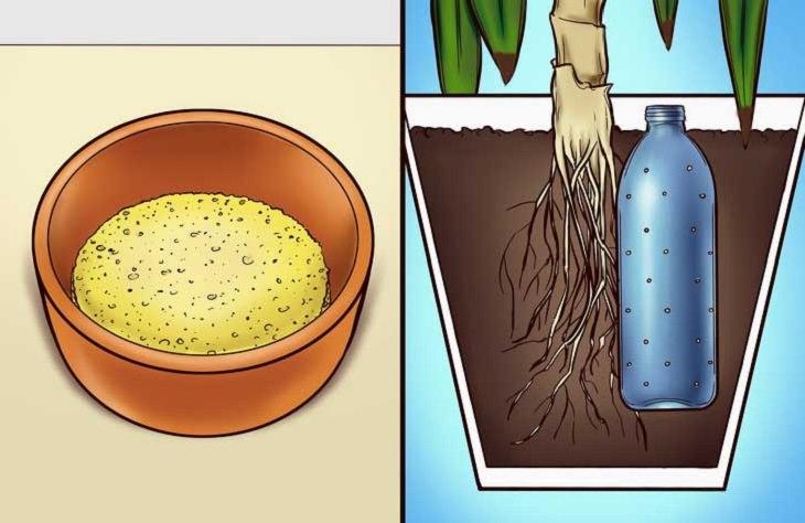 סימנים למחלות אצל צמחים: קערה ובה אדמה, ועציץ שרואים את חלקו התחתון, ובו יש בקבוק מים מחורר
