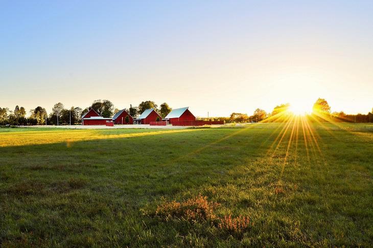 טריקים מסקנדינביה לחיים נוחים ומאושרים: בתים אדומים ליד שדה ירוק בשוודיה