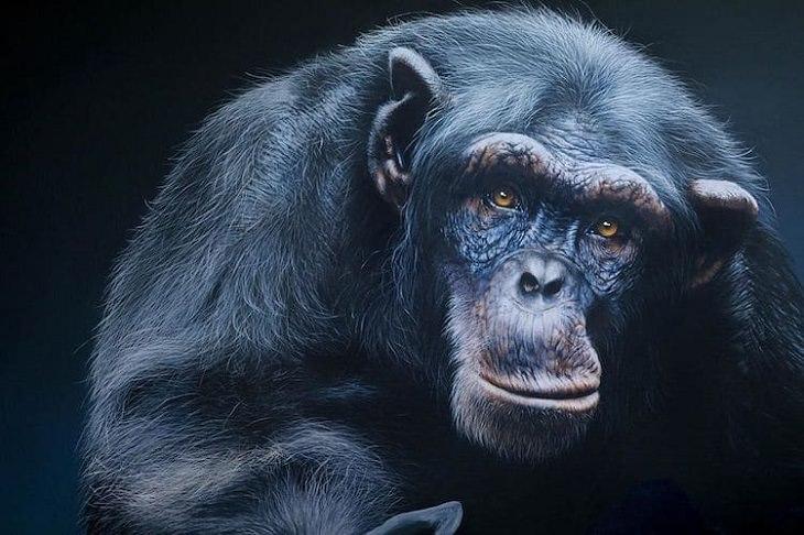 ציורי חיות בר של קרלה גרייס: ציור של קוף