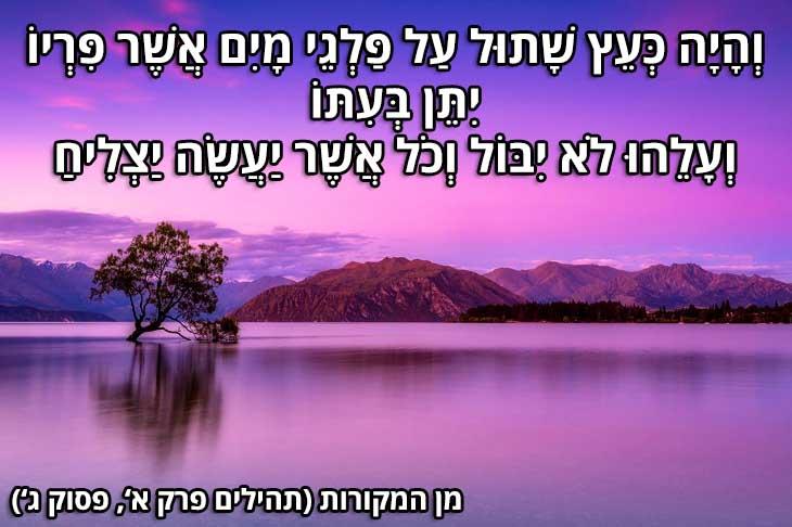 """ציטוטים יפים בעברית: """"וְהָיָה כְּעֵץ שָׁתוּל עַל פַּלְגֵי מָיִם אֲשֶׁר פִּרְיוֹ יִתֵּן בְּעִתּוֹ  וְעָלֵהוּ לֹא יִבּוֹל וְכֹל אֲשֶׁר יַעֲשֶׂה יַצְלִיחַ"""" (מן המקורות, תהילים פרק א', פסוק ג')"""