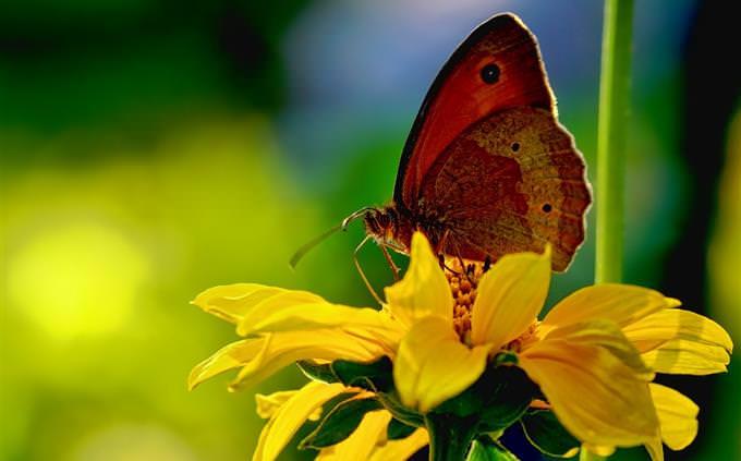מבחן זיכרון: פרפר על פרח