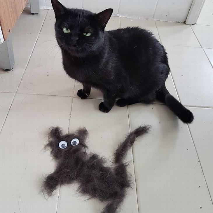 חתולים מוגזמים: חתול עם פרצוף נבזי ומולו שאריות פרווה בצורת חתול עם עיניים להדבקה
