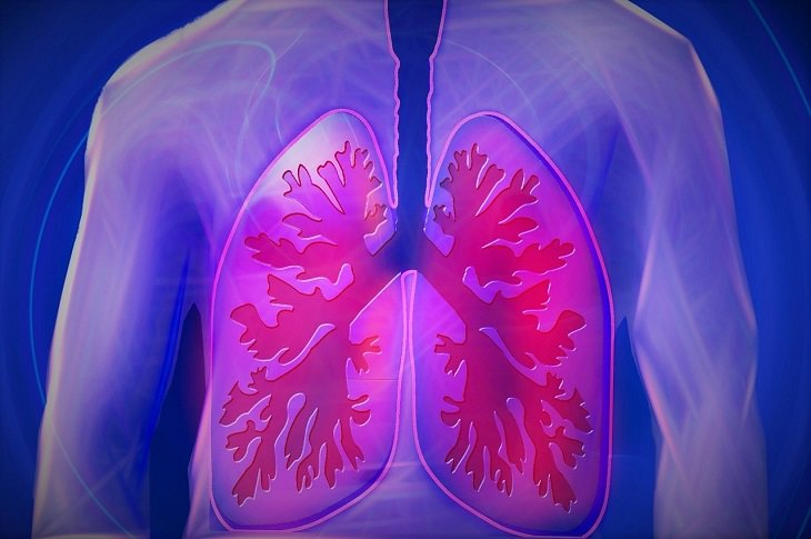 מאכלים לבריאות הריאות: איור של הריאות בגוף האדם