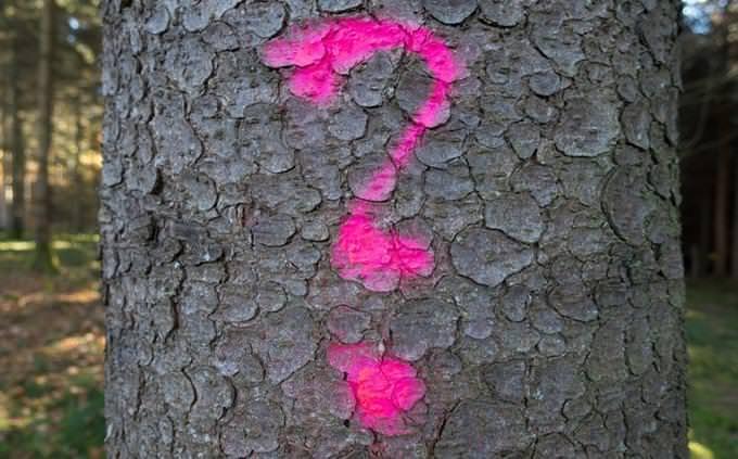 סימן שאלה מצויר על גזע עץ