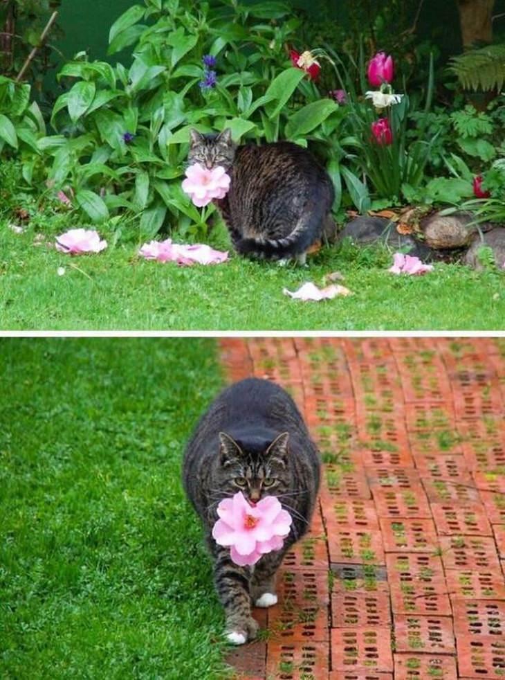 חיות חמודות ומצחיקות: חתול מביא פרח