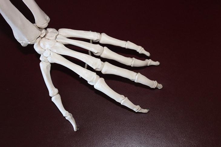 יתרונות בריאותיים של עירית: דגם של עצמות כף יד