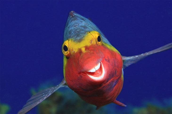 תמונות מתחרות צילומי חיות מצחיקות לשנת 2020: דג בצבעים תכלת, צהוב ואדום מחייך