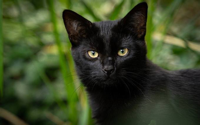 מבחן אישיות - איזה לב יש לך: חתול