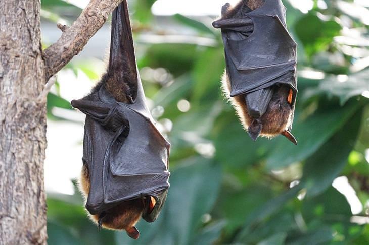 עובדות על עטלפים: עטלפים ישנים