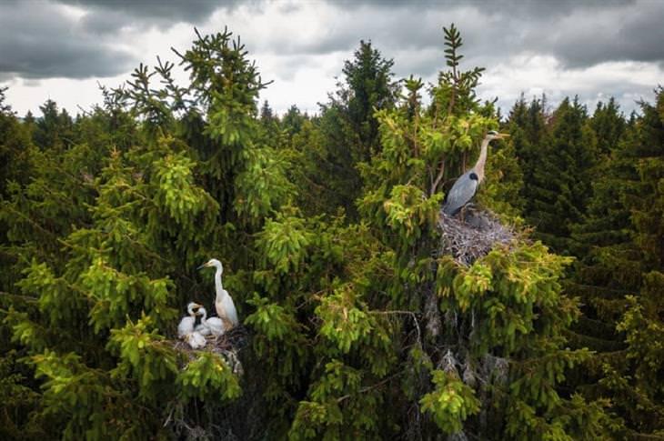 תחרות צילומי רחפן 2020: אנפתיים על צמרות עצים
