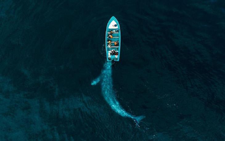 תחרות צילומי רחפן 2020: לוויתן שוחה מתחת לסירה קטנה