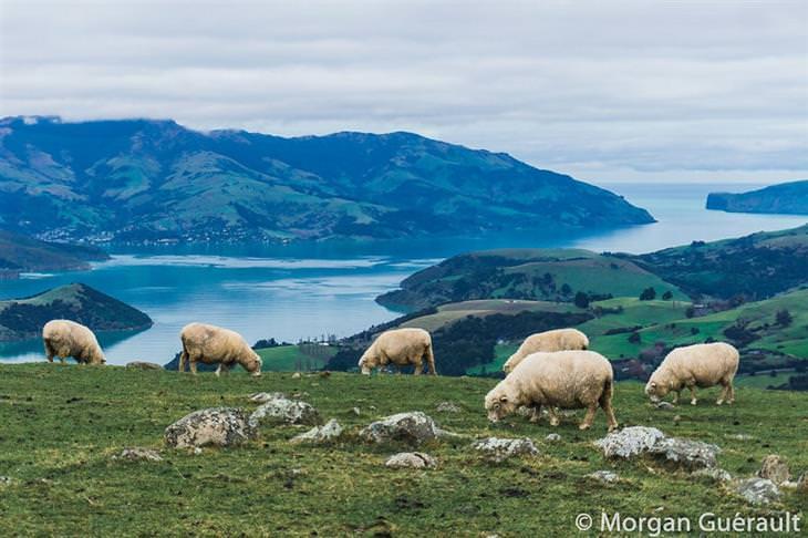 תמונות יפות של ניו זילנד: מפרץ אקרואה