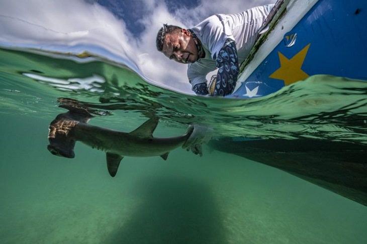 """תמונות מתחרות """"בטוח מתחת למים"""": אדם מתכופף מסירה ותופס פטישן"""
