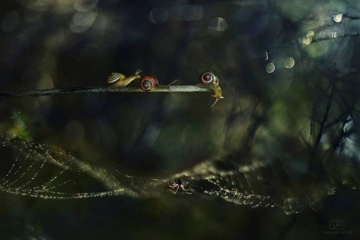 תמונות של שבלולים: 3 שבלולים על צמח