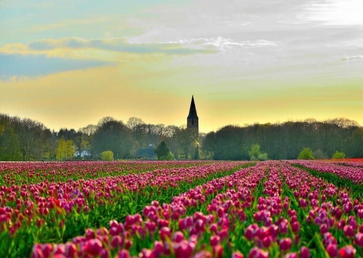 מחוזות הולנד: שדה פרחים במחוז דרנתה