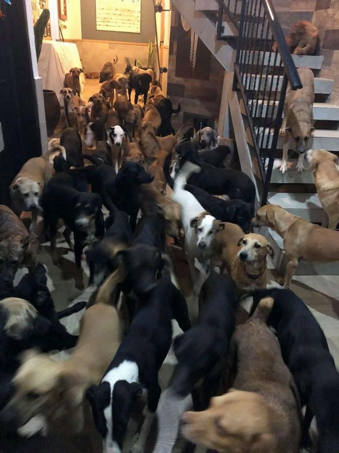 סיפור על איש שהציל כלבים מסופה: הרבה כלבים בבית