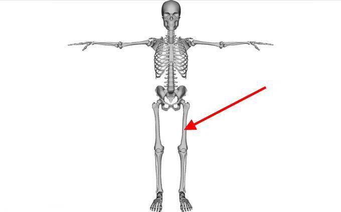 מבחן זיהוי חלקים בגוף האדם: שלד וחץ שמצביע אל אזור ברגל
