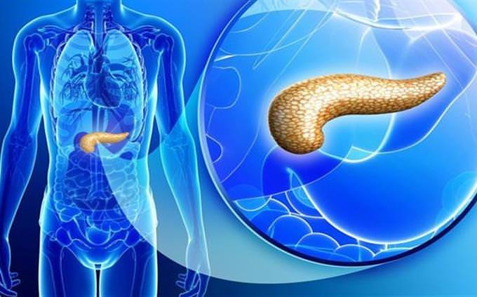 מבחן זיהוי חלקים בגוף האדם: איבר מסומן בצהוב בגוף בצבע כחול